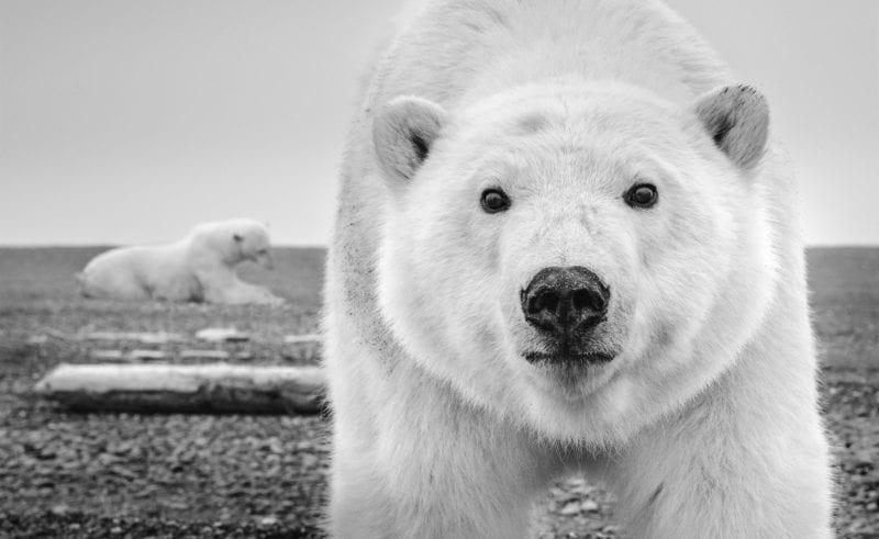 An incredible shot captured on Barter Island, Alaska
