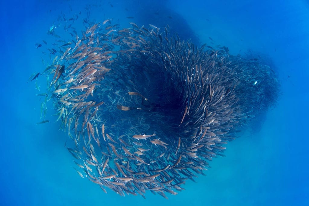 Hanli Prinsloo delves into the heart of this fish tornado