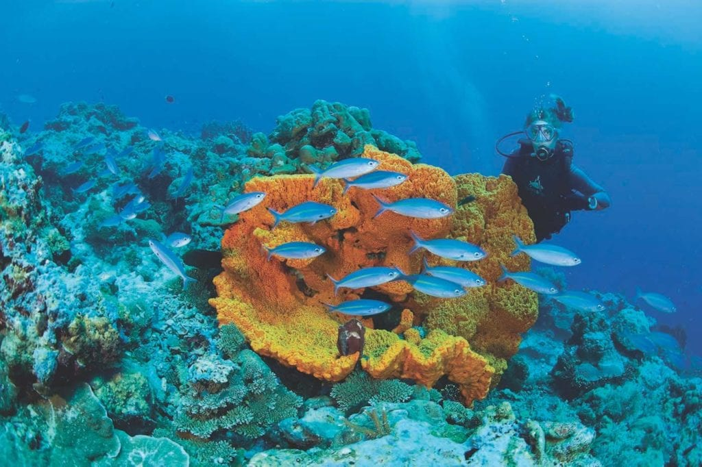 discover the aquatic life and corals in these beautifully unspoilt waters