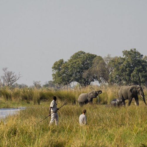 a couple of safari rangers within close proximity to 4 elephants