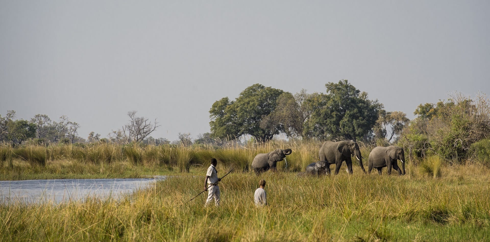a couple of safari rangers within close proximity to 4 elephants