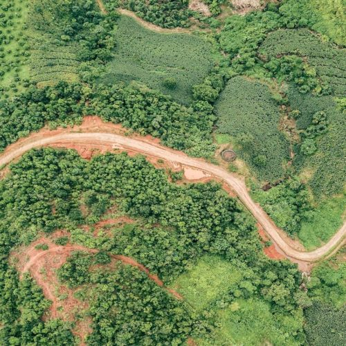 dirt track meandering through the jungle