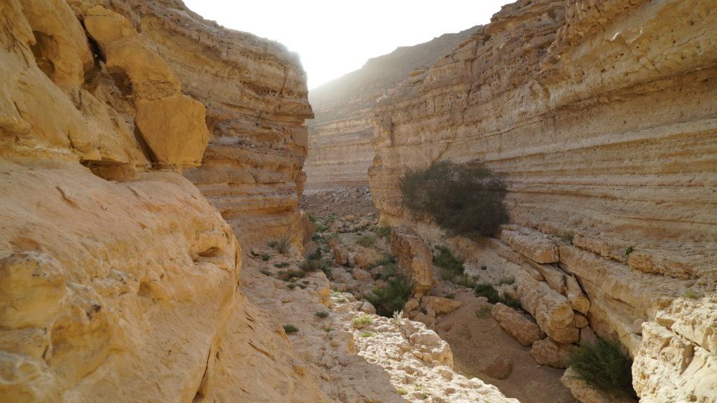wander through the desert rock