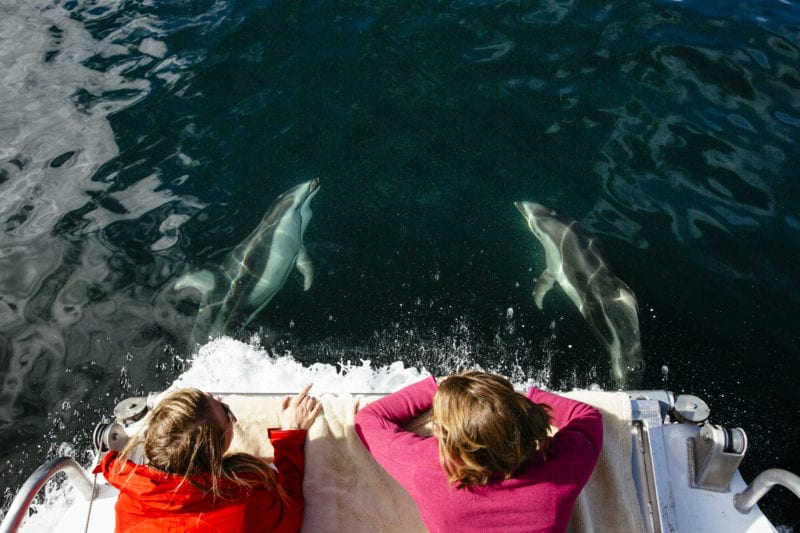 children lean off the back of a boat and admire the aquatic life