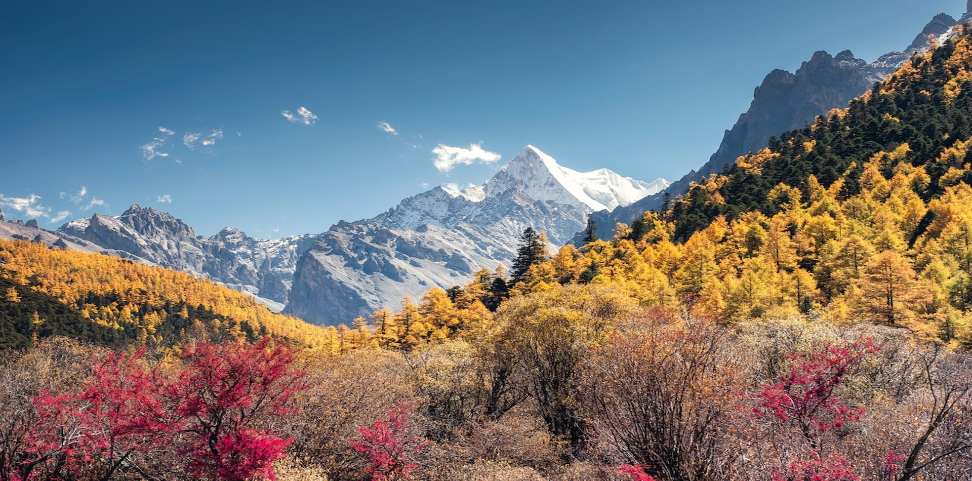 vibrant coloured forests with snow capped mountains in the background