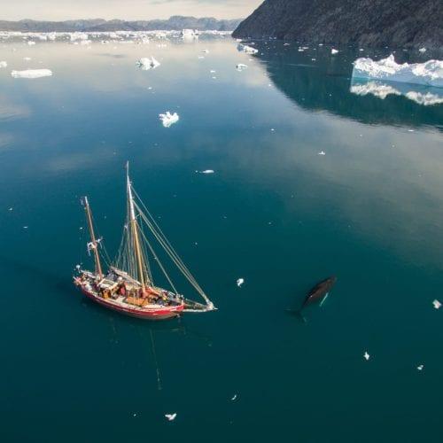 Expedition sailboat Arktika has close encounter with a small humpback whale. Sermilik fjord, Ammassalik region, east Greenland.