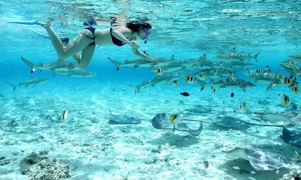 Tahiti boasts a rich aquatic life