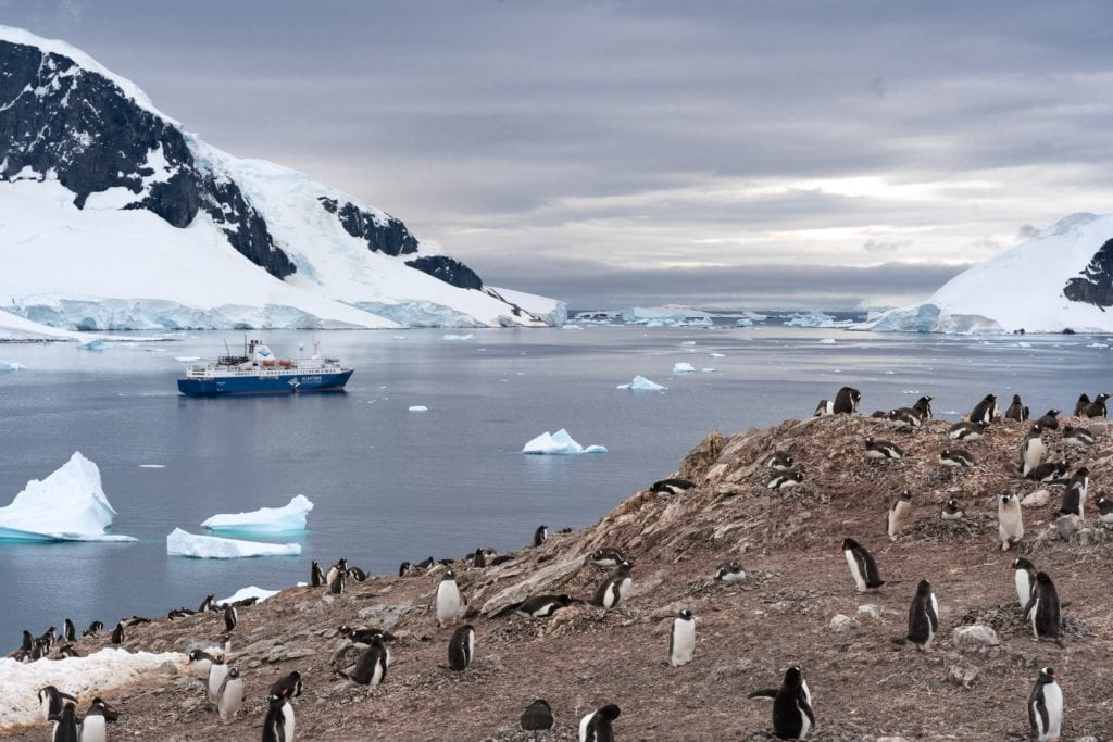 Arctic penguins scattered on the shore line