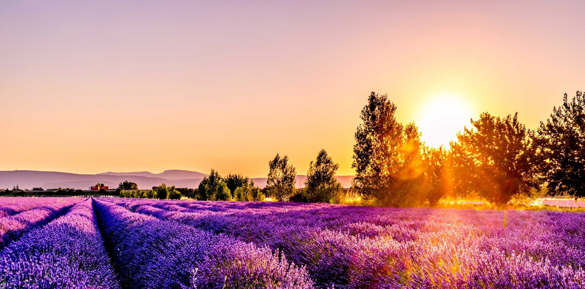 Lavender field at sunset in Drome, France
