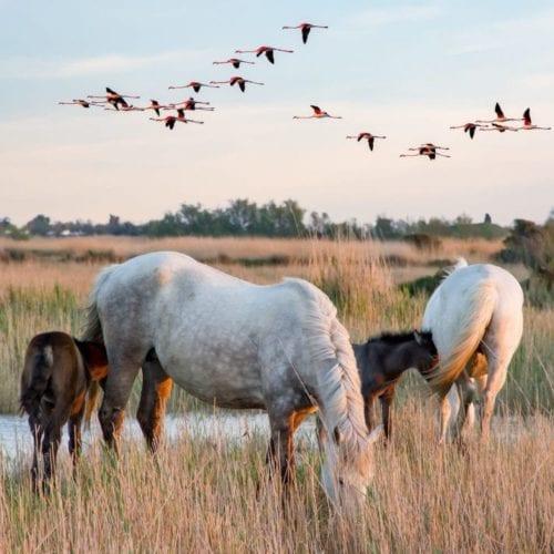 wild horses and birds near a river amongst grasslands