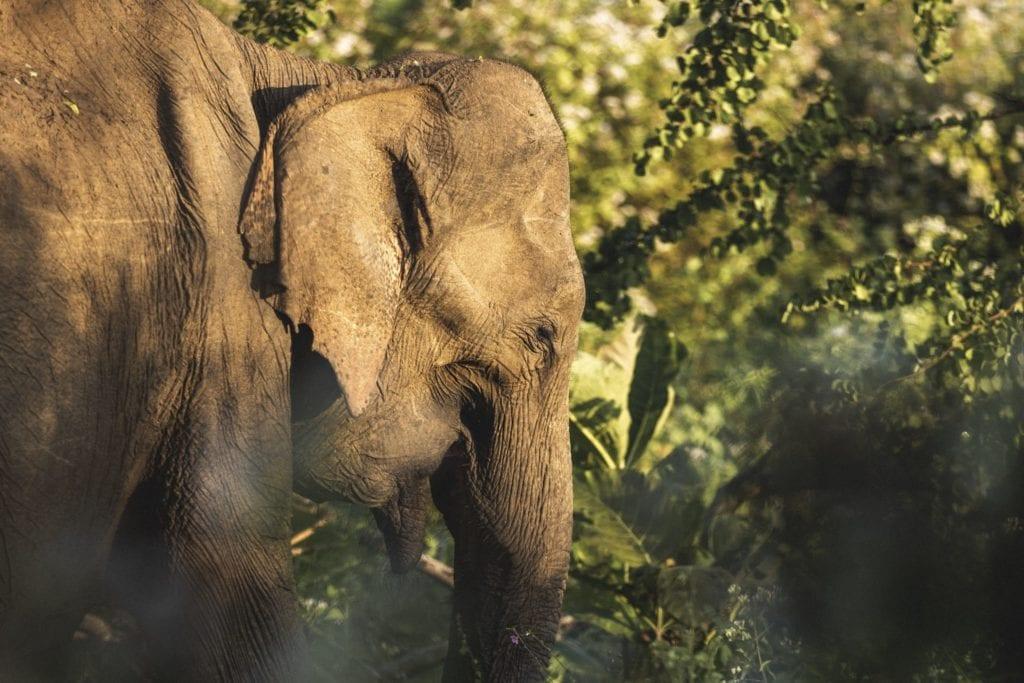 Elephant and Wildlife Amanwella Sri Lanka