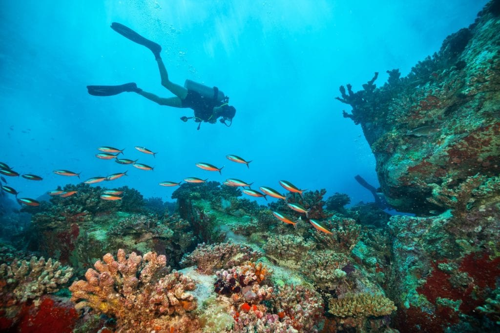 Diving Ocean Reefs in Sri Lanka