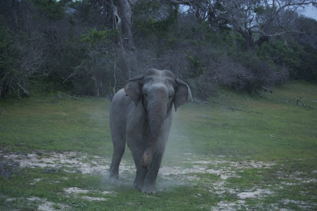Elephant and Wildlife of Gal Oya Lodge Sri Lanka