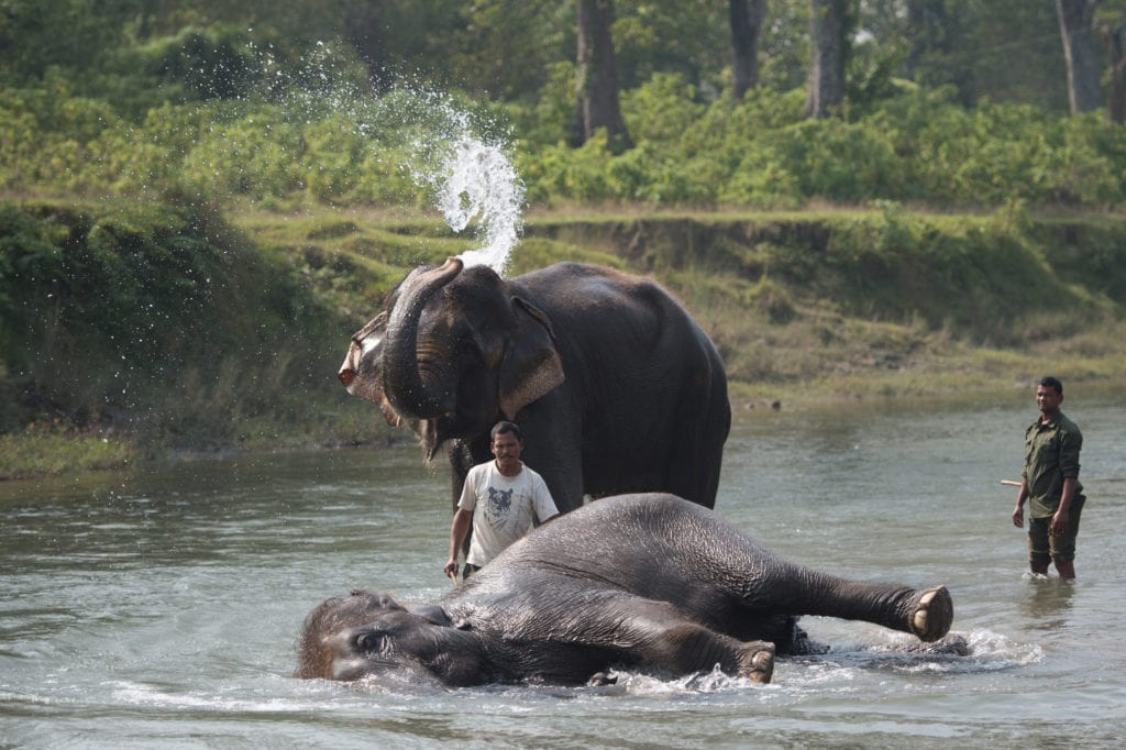 Elephant Bath at Naru Lodge in Nepal