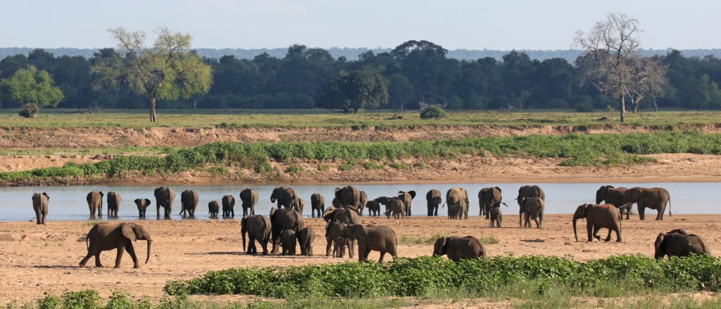 Elephants drinking in front of camp