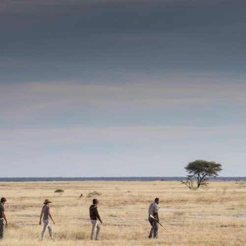 Guided Walk from Onguma Lodge Namibia