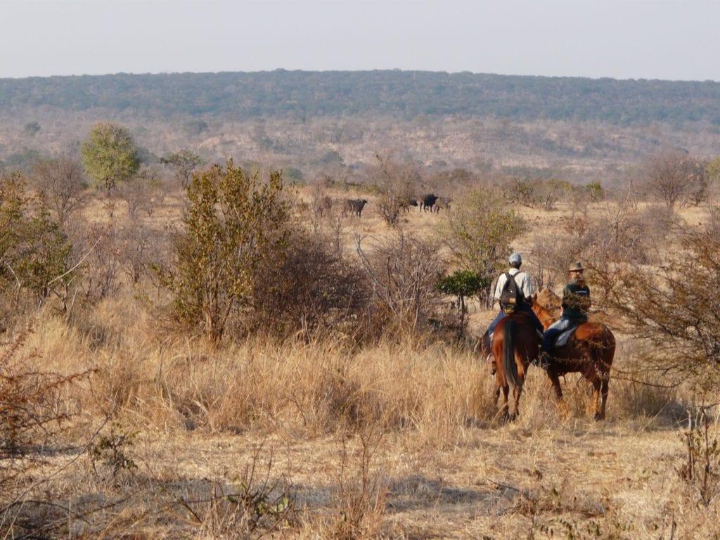 Horse riding in Zimbabwe