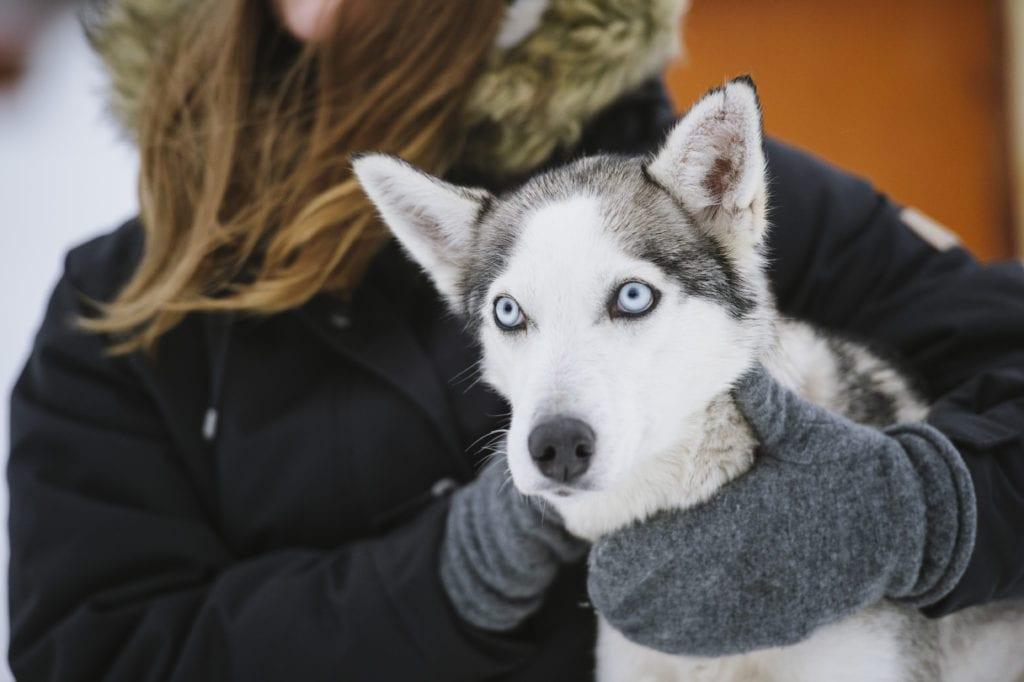 Husky Tours Farm Visits Lapland Finland