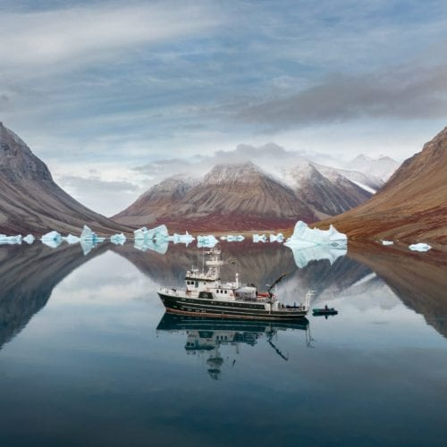 Kinfish In Greenland Hidden Fjord