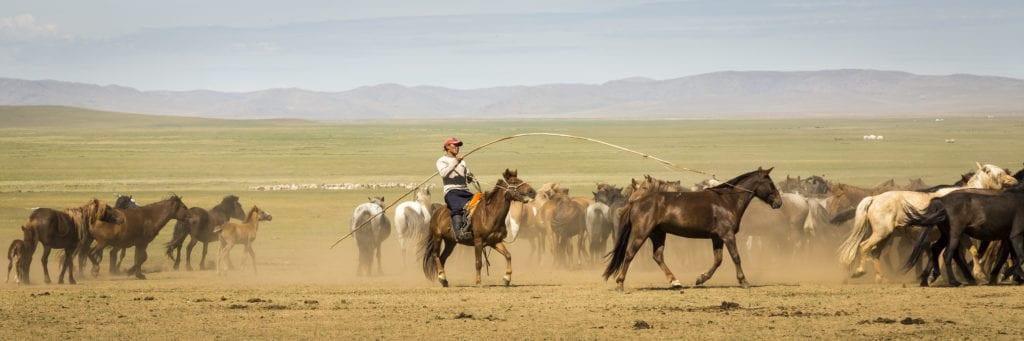 Mongolias Horses