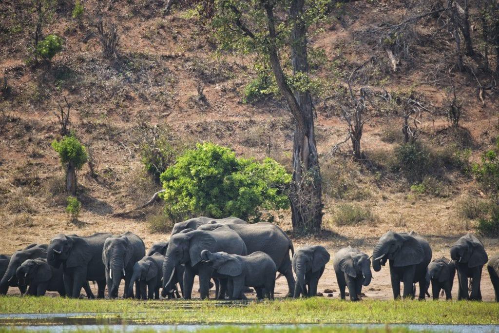 Herd Elephants Zimbabwe