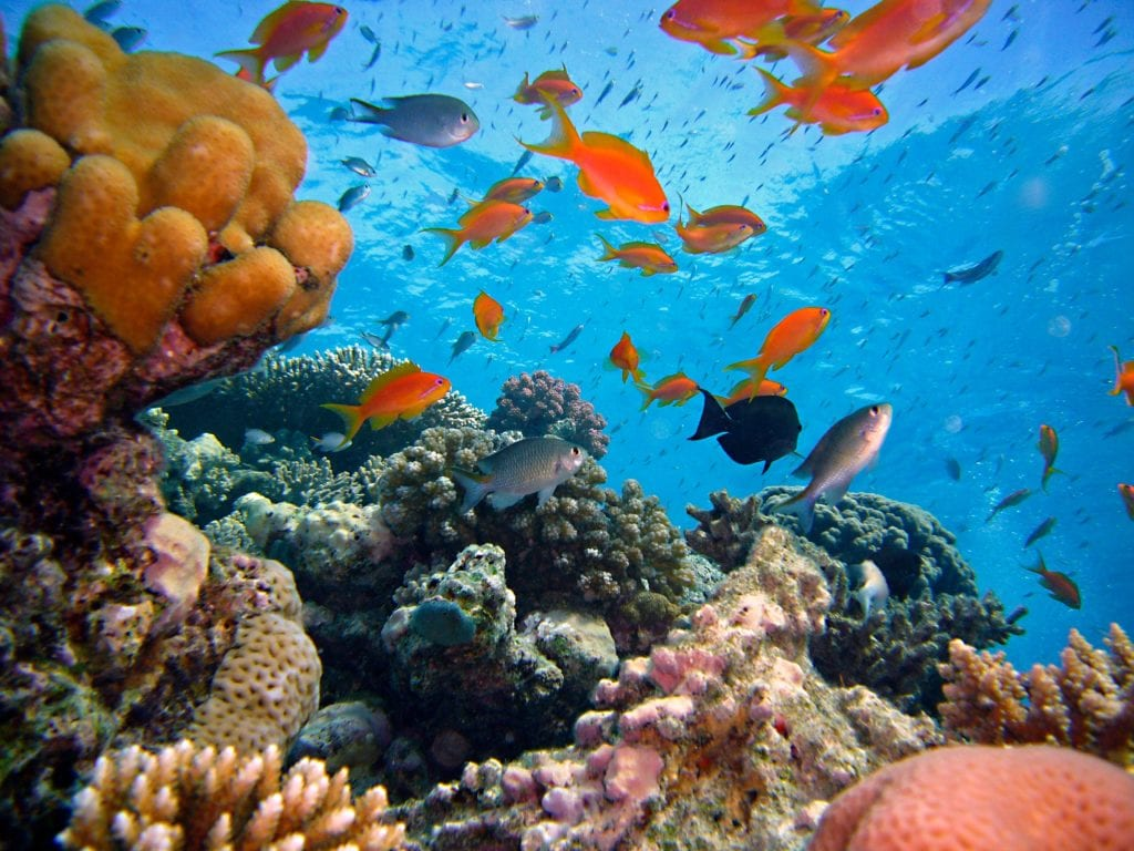 Reef and Ocean Wildlife Mozambique