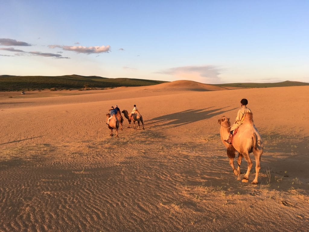 Bactrian Camel Mongolia