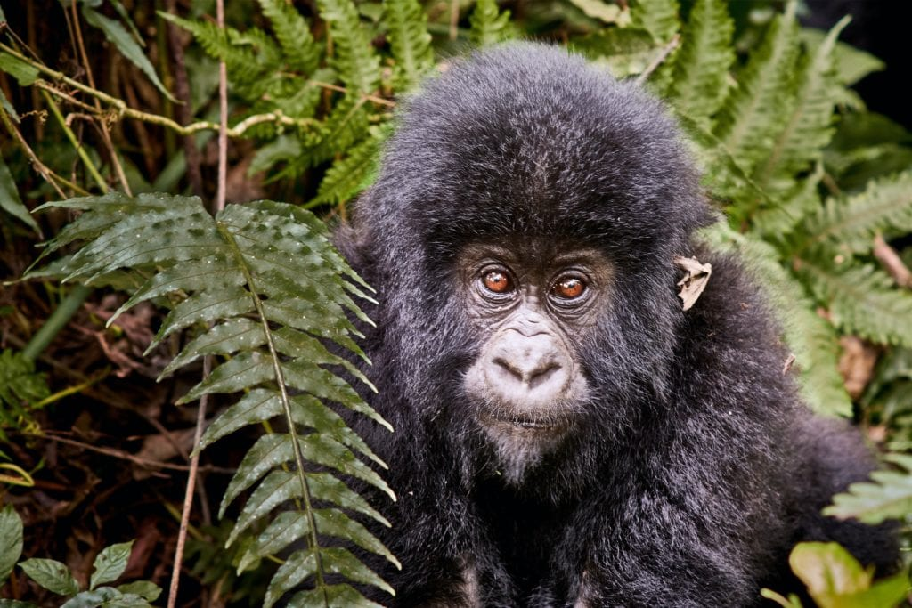 Primates and Wildlife in Rwanda