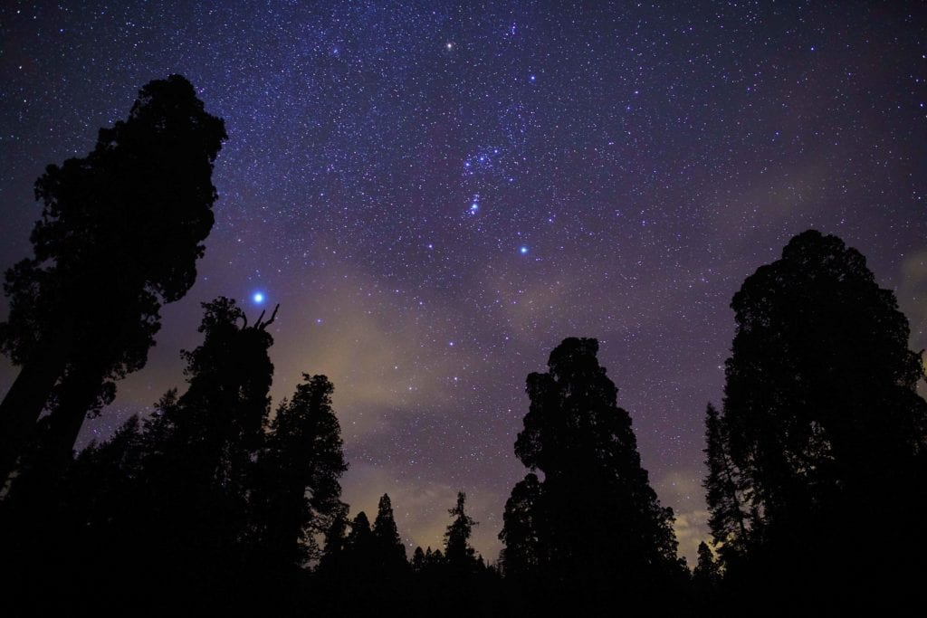 Night skies above Californian Sequoias