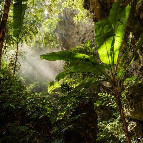 Vietnam Jungle In Cave