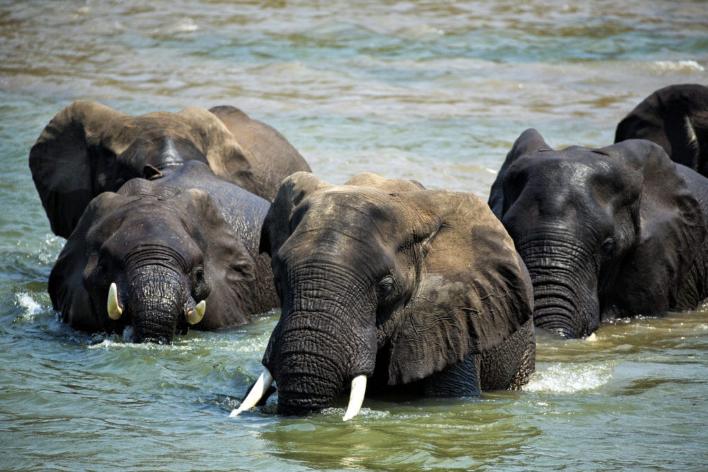 Elephants Wildlife