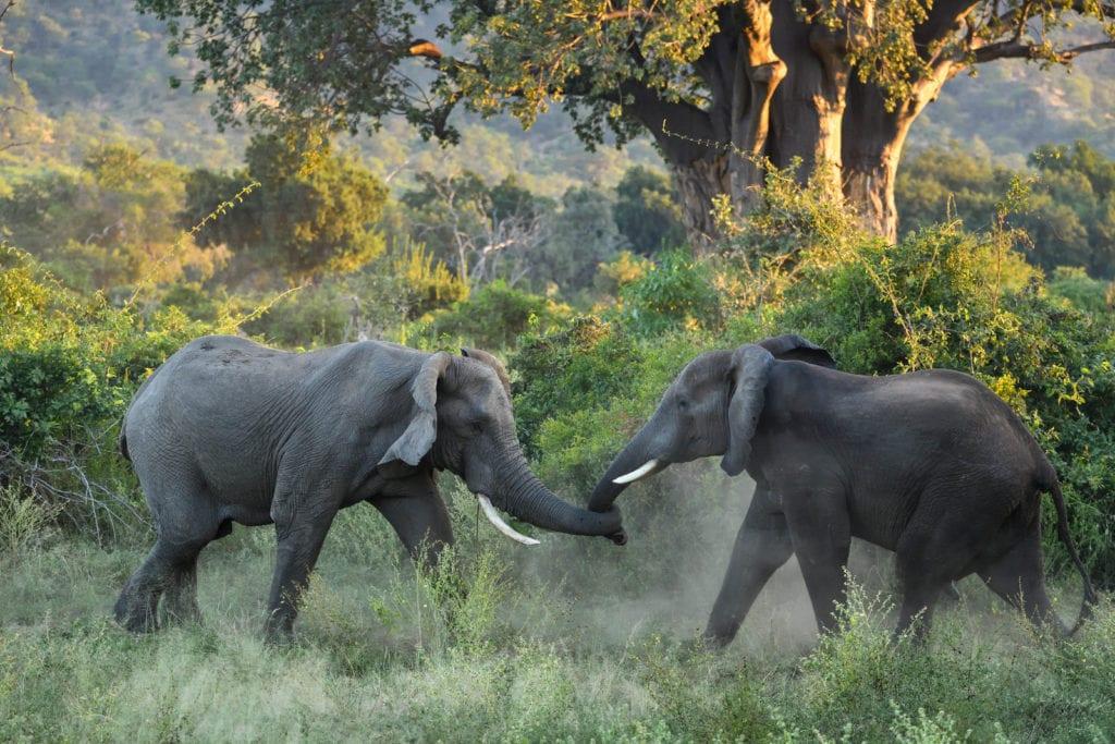 Elephants Wildlife Zimbabwe