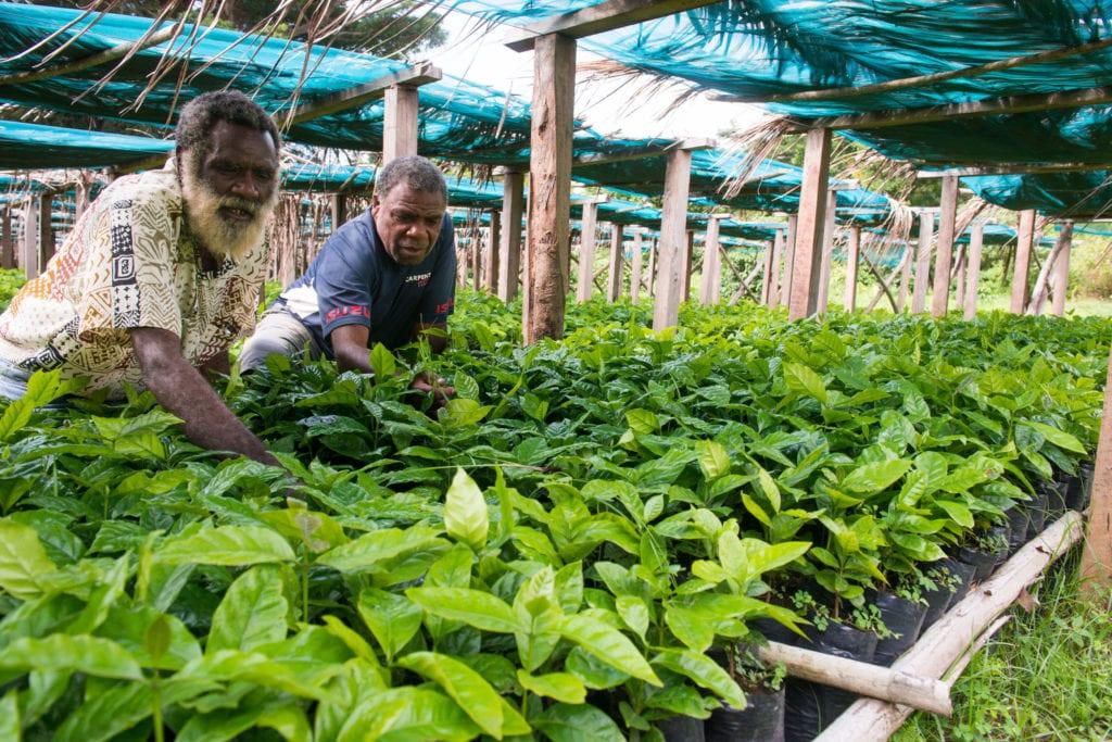 agritourism tanna coffee plantation vanuatu
