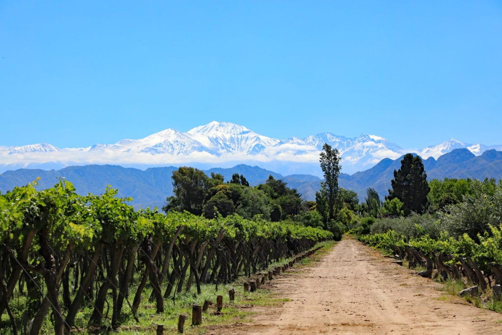 Argentinian vineyards with mountain backdrop