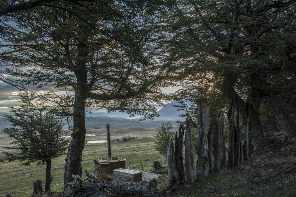 forests round awasi patagonia