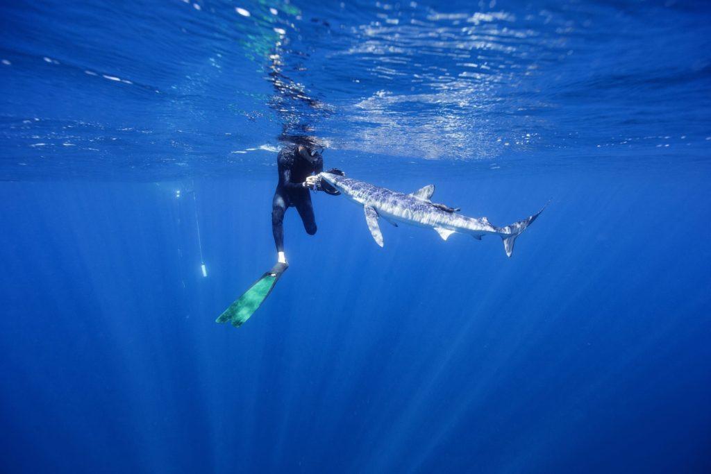 Baja California diving with sharks