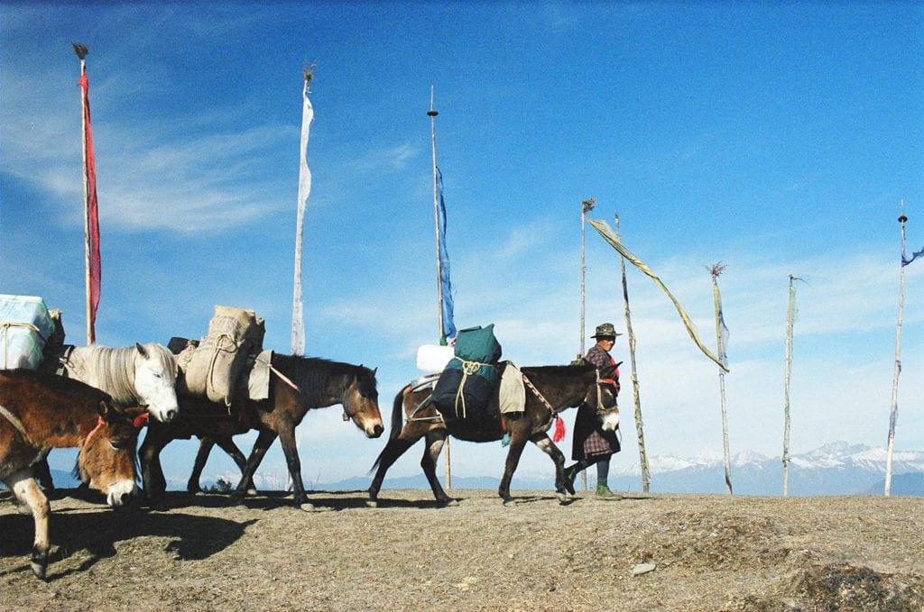 Mule trekking in mountains Bhutan