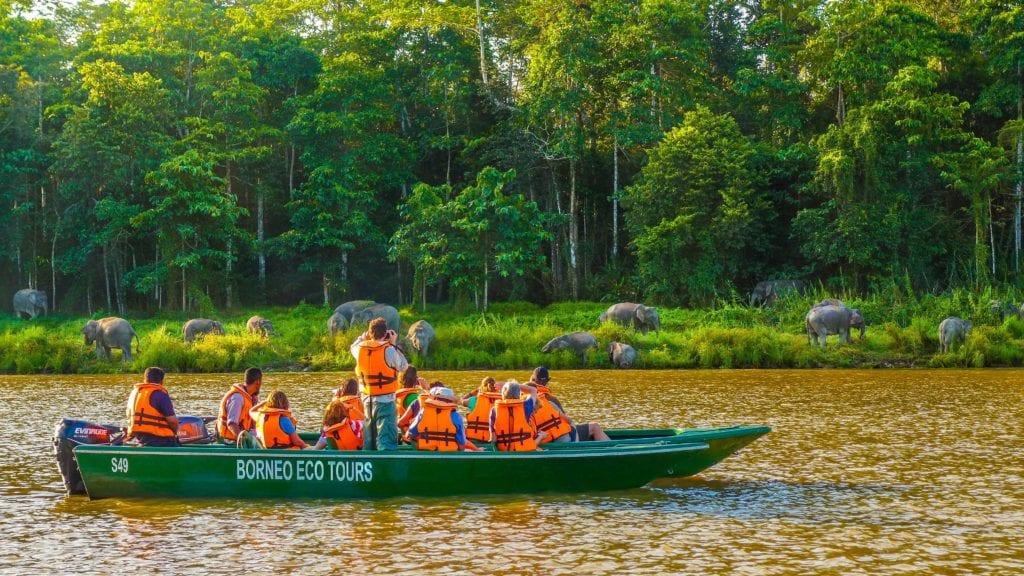Borneo Sakau Elephants