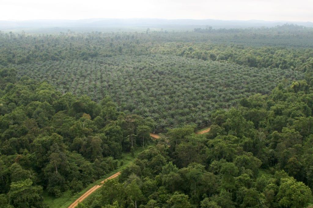 Borneo Sakau Rainforest