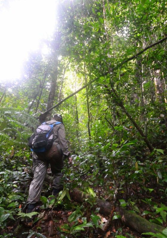 Brazil Amazon Jungle Trekking Guide