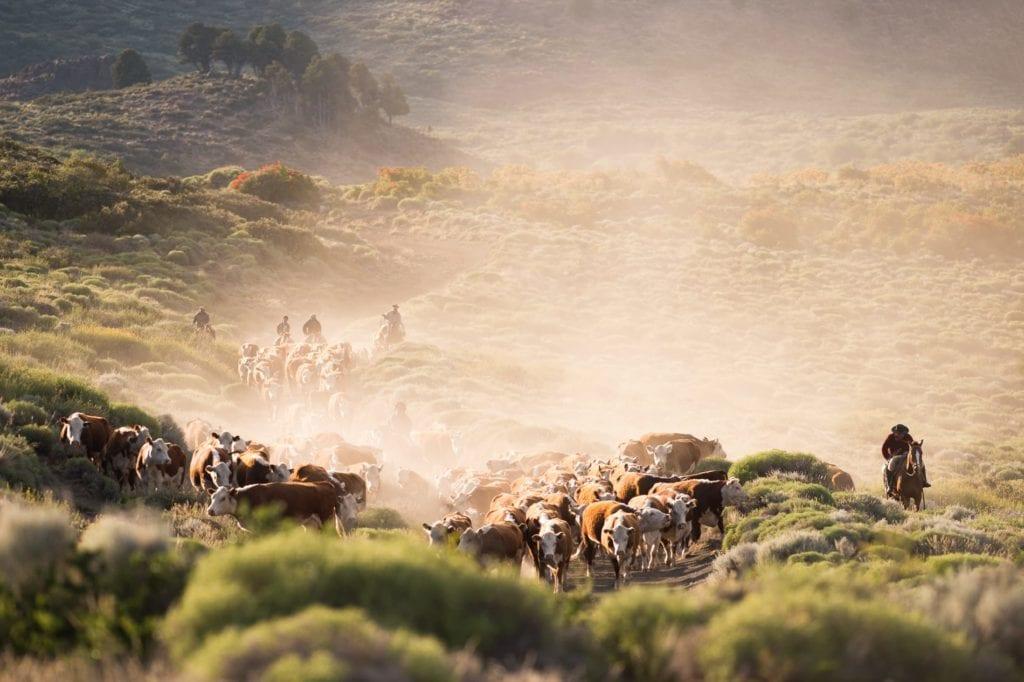 horseback cattle herding at Caballadas in Argentina
