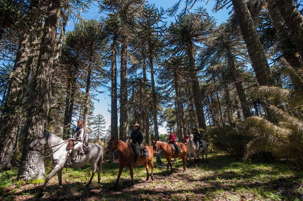 horseback trekking through forests in Argentina