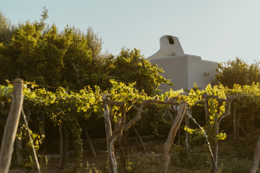 Cavas wine lodge vineyards and exterior