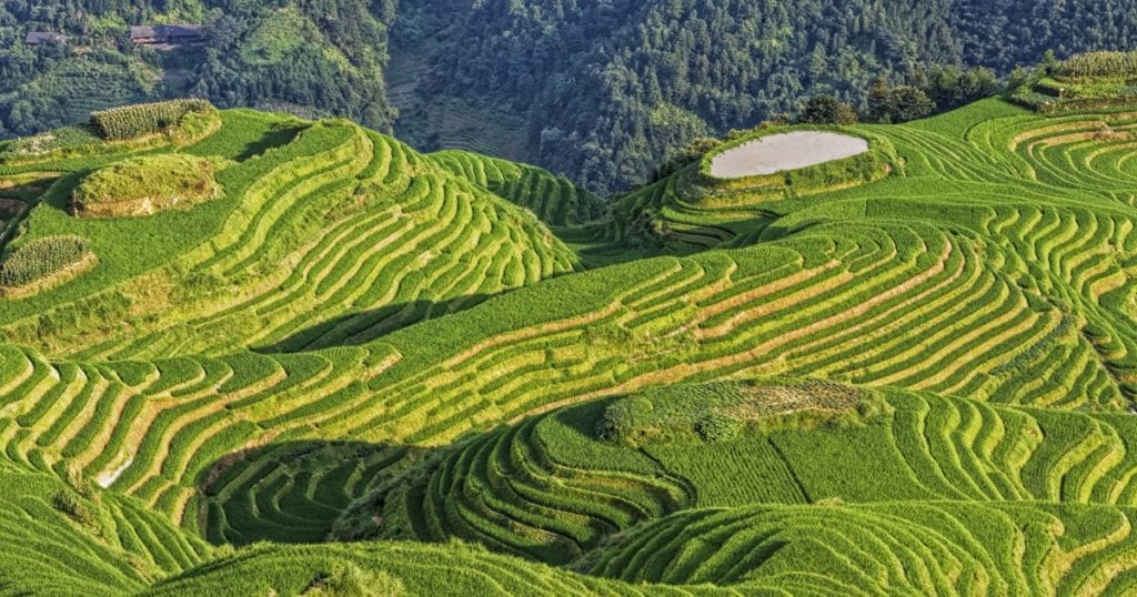 Aerial view of Chinese rice terraces