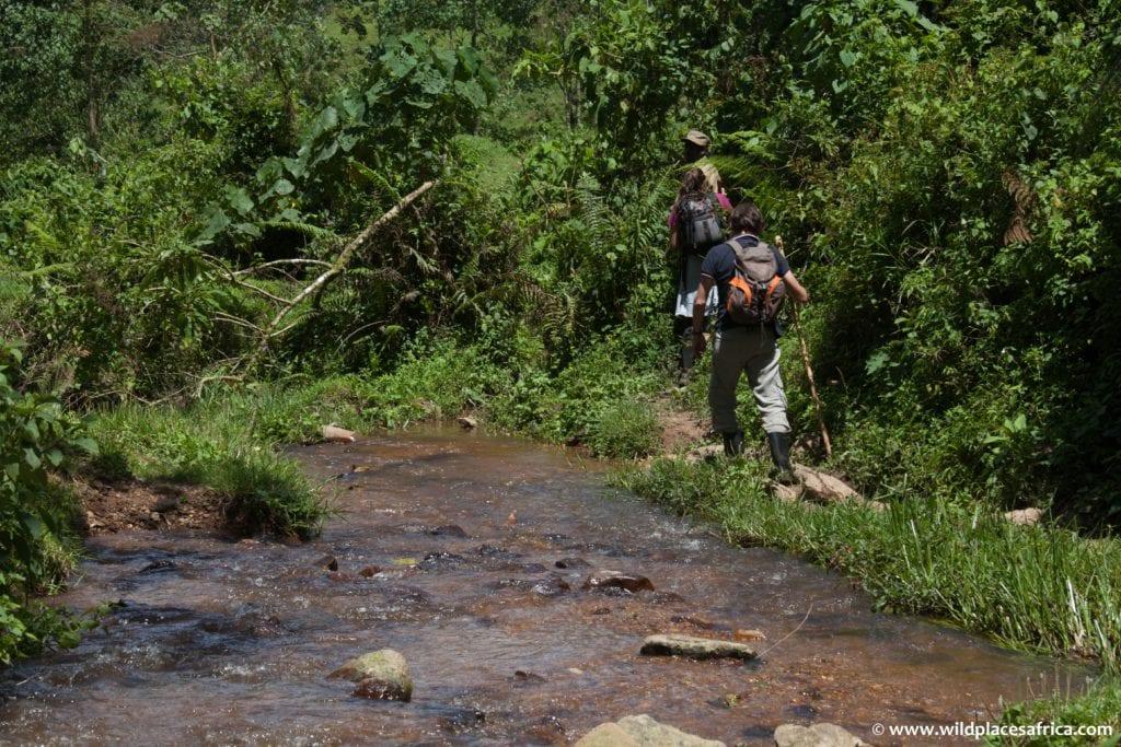 Trekking by a stream in Congo