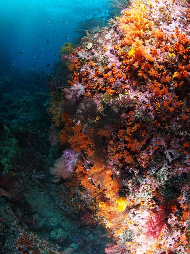 Coral Reef Raja Ampat Diving Indonesia