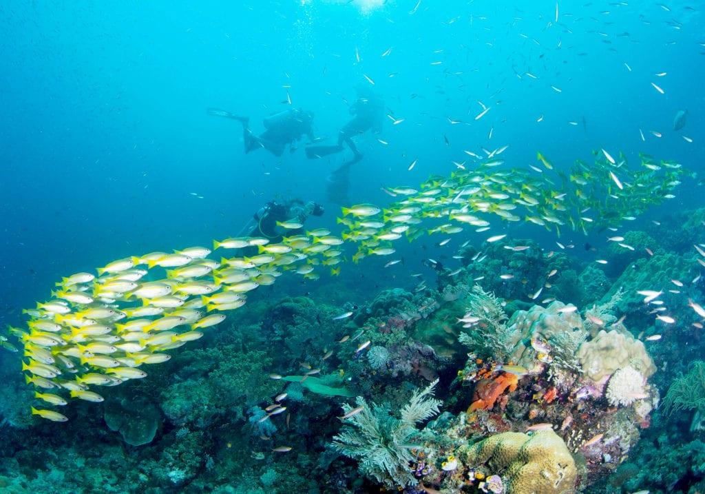 Diving Pelorus Raja Ampat Indonesia
