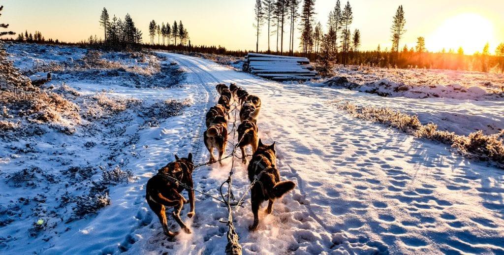 Dog Sled Landscape