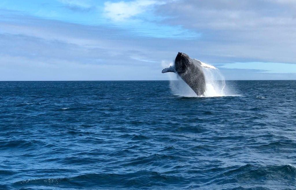 galapagos ecuador whale