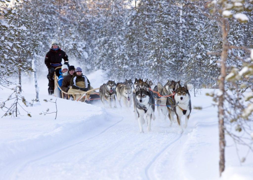 Husky Sledge Tour Finland